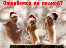 прикольные новогодние хомячки